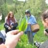 Week end erboristico con Maria Sonia Baldoni, la Sibilla delle erbe
