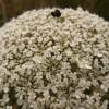 FotoRacconto del laboratorio sulle erbe a Sant'Arcangelo Trimonte