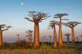 Giornata della Bellezza Sostenibile per il Madagascar. Intervista all'AD Salon di Benevento