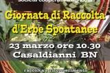 Giornata di raccolta di erbe spontanee. 23 marzo, Casaldianni. Con cooperativa Lentamente. Coerenze:19/20
