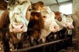 Visita a Mara Savoia e la sua Azienda Agricola