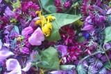 Raccolta di erbe spontanee con Daniela Severgnini. Domenica 25 maggio, La Cinta Benevento. Coerenze:18/20