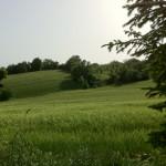 macchia-del-rovo-campo-d'orzo4