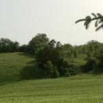 macchia-del-rovo-campo-d'orzo6