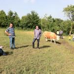 macchia-del-rovo-vacca-al-pascolo