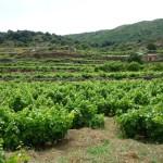 pantelleria20-tullia-bartolini
