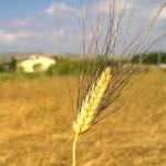 spigabruna61,1-giornata-partigianale