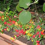 giardini-aperti-15-nina-iadanza-cautano
