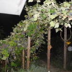 giardini-aperti-18-nina-iadanza-cautano